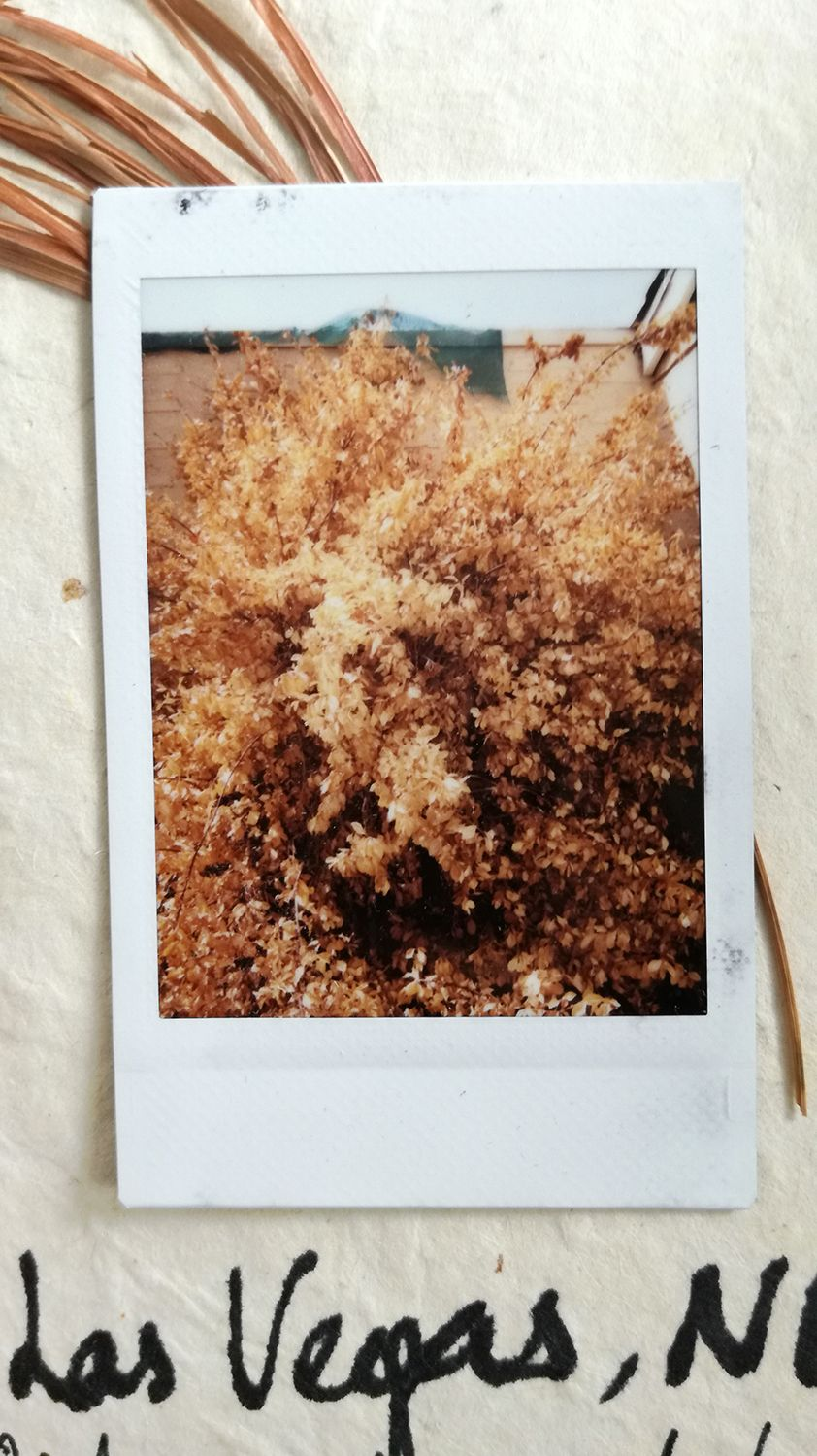 Kimdary_yin_Polaroid_Podcast_travel_neworleans